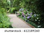 Pathway Of Hydrangeas In Monro...