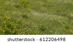 Warm Green Meadow Filled With...