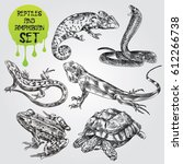 Set of hand drawn Reptiles and amphibian isolated on white background. chameleon, frog, snake, lizart, turtle in sketch style. Retro hand-drawn Reptiles and amphibian vector illustration.