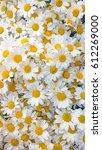white daisy | Shutterstock . vector #612269000