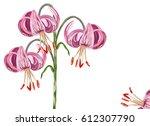 botanical illustration of pink...   Shutterstock . vector #612307790