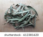 eucalyptus leaf. view from... | Shutterstock . vector #612381620