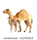 watercolor cute camel with baby.... | Shutterstock . vector #612394613
