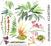 watercolor tropical plant and... | Shutterstock . vector #612407084