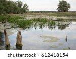 grass near water. swamp   Shutterstock . vector #612418154