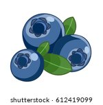 blueberry isolated on white... | Shutterstock .eps vector #612419099