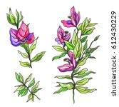pink purple tropical flower...   Shutterstock . vector #612430229