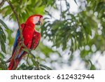 red macaw parrot resting on a... | Shutterstock . vector #612432944