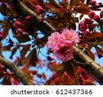 branch with a pink flower | Shutterstock . vector #612437366