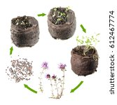 Life Cycle Of Plant. Stages Of...
