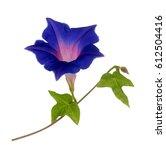 Dark Blue Purple Glory Morning...
