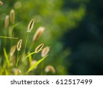 dog's tail grass | Shutterstock . vector #612517499