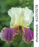 garden iris close up | Shutterstock . vector #612570278