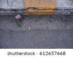 Pink Flower On Street. Flower...