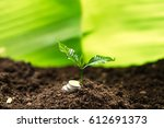 sapling in the soil green... | Shutterstock . vector #612691373