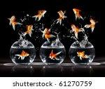 Stock photo goldfishs jumps upwards from an aquarium on a dark background 61270759