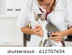 Stock photo veterinary performing auscultation a sick kitten in the clinic 612707654