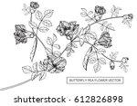 drawing flowers. butterfly pea... | Shutterstock .eps vector #612826898