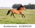 bay stallion running free. | Shutterstock . vector #612854210