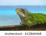 bright green iguana  lizard... | Shutterstock . vector #612866468