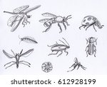 set of insects. sketch  pen ... | Shutterstock . vector #612928199