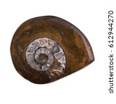 Small photo of Fossil Ammonite - a prehistoric marine mollusc with a spiral shell. Has clipping path.