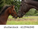 big black horse and small cute... | Shutterstock . vector #612946340
