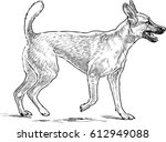 Stock vector sketch of a dog on a walk 612949088