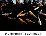 Koi Swimming In A Water Garden...