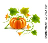 growing pumpkin plant isolated... | Shutterstock .eps vector #612965459