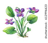 Illustration Of Fragrant...