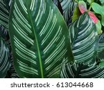 green leaf white feature | Shutterstock . vector #613044668