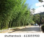 bamboo tree fence beside the... | Shutterstock . vector #613055900