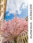 Small photo of Blooming trees in a street in Halle Saale, Sachsen Anhalt in Germany