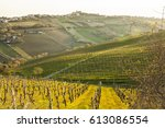 Vineyard Landscape In The...