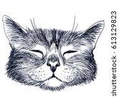 Hand Drawn Portrait Of Cat....