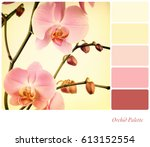 pink orchids filtered to look...   Shutterstock . vector #613152554