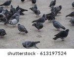 Group Of Pigeons