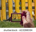 Blackbird Female In Camera...