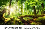 green forest scenery with the... | Shutterstock . vector #613289783