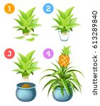 growing pineapple at home.... | Shutterstock .eps vector #613289840
