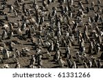 magellanic penguins at... | Shutterstock . vector #61331266