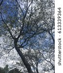 Small photo of Close up to a dogwood tree with the shapes of branches accentuated against a blue sky.