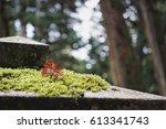 red dead leaf on moss on stone... | Shutterstock . vector #613341743