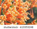 orange flower bloom in summer