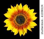 Fresh Yellow Sunflower Fresh...
