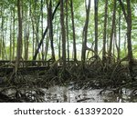 mangrove forest trees on mud... | Shutterstock . vector #613392020