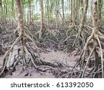 mangrove forest trees on mud... | Shutterstock . vector #613392050