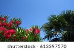 Flowering Branches And Blue Sky