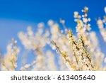 closeup of spring blooming tree.... | Shutterstock . vector #613405640